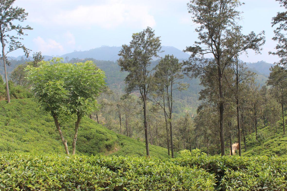 lilytoutsourire - 2 semaine de rêve au sri lanka