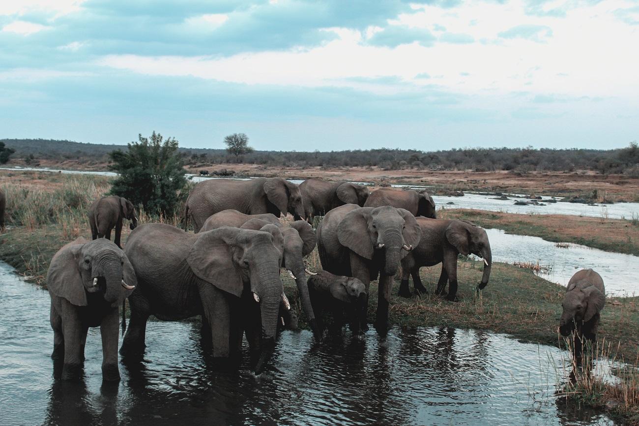 lilytoutsourire - safari au parc kruger - 3 jours dans le bush (16)