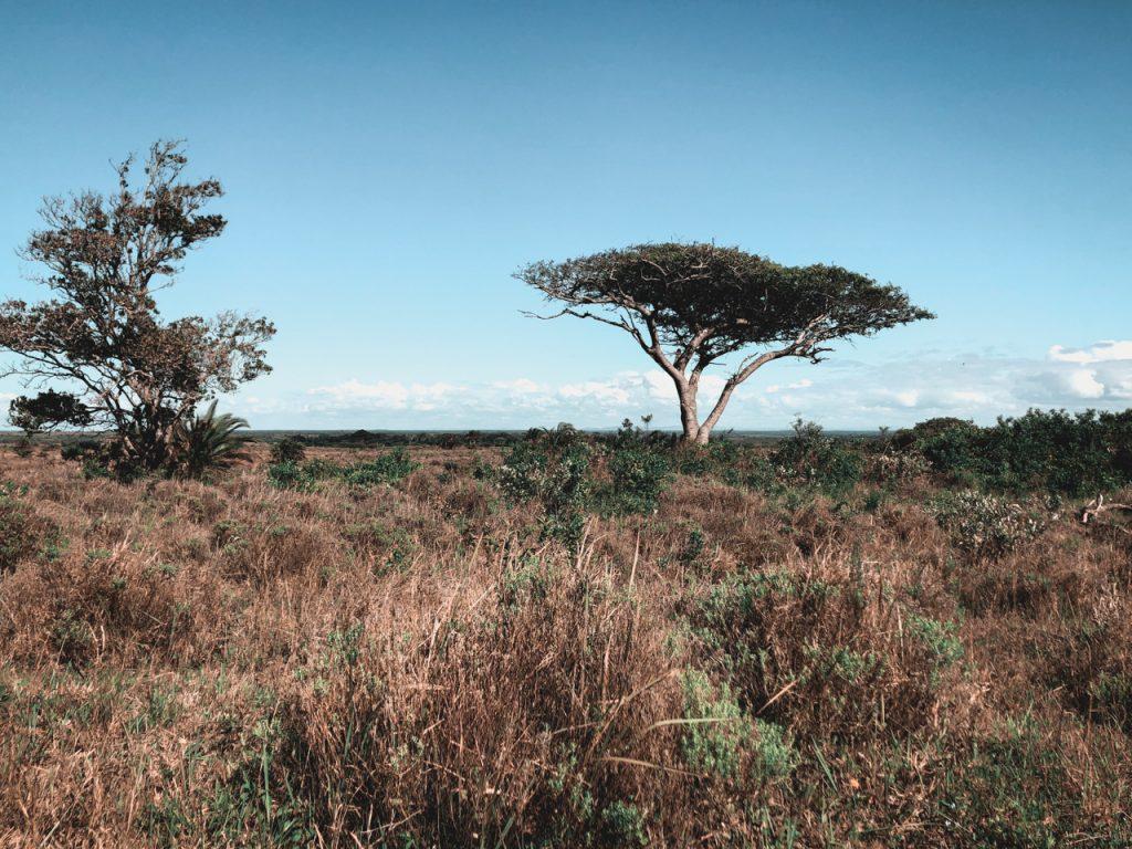 lilytoutsourire - santa lucia le village des hippopotames en afrique du sud (10)