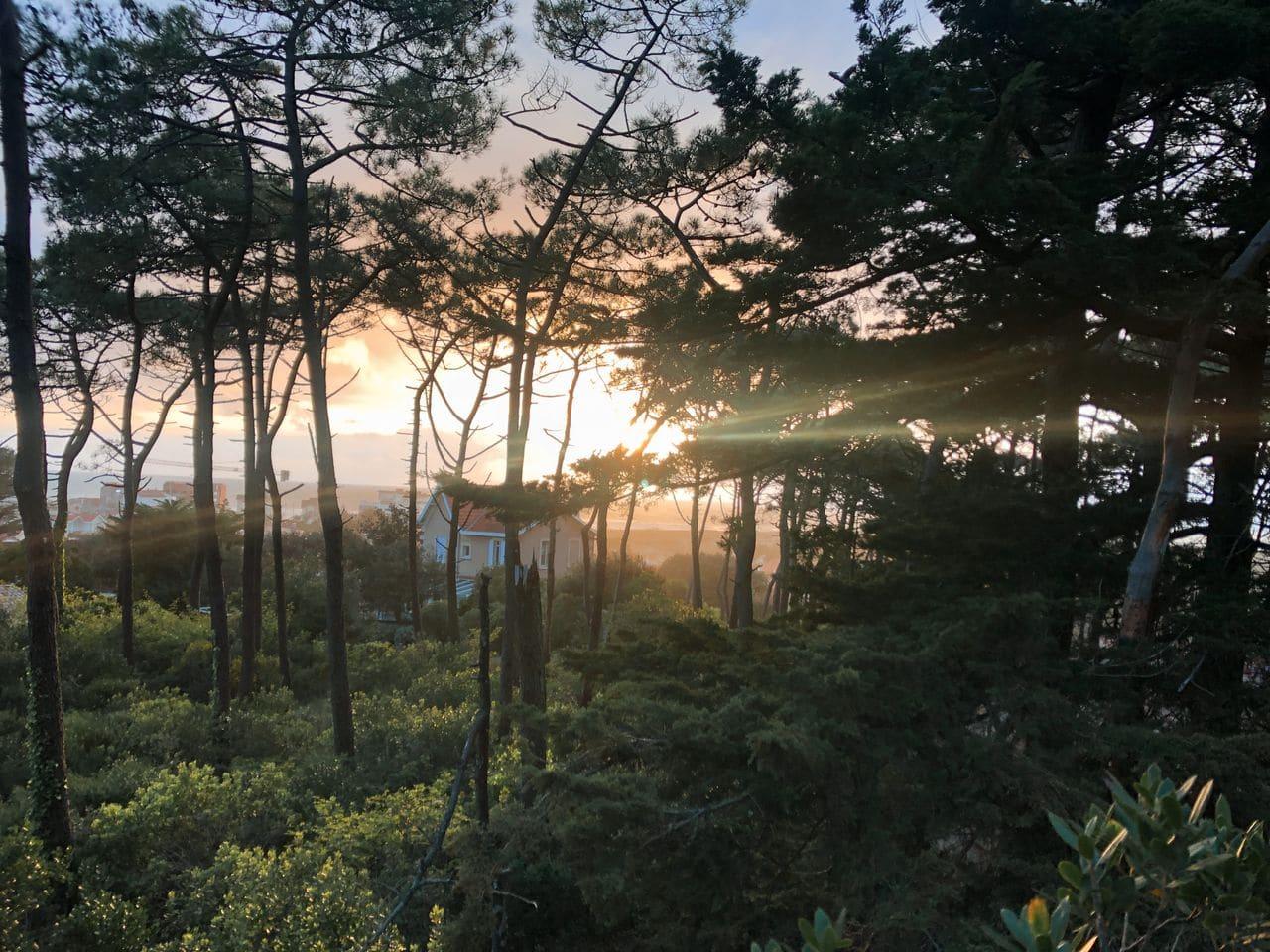 airbnb la cabane perchée lacanau (3)
