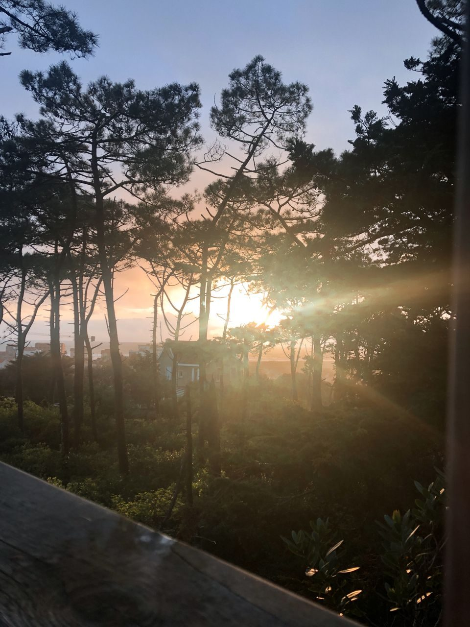 airbnb la cabane perchée lacanau (2)