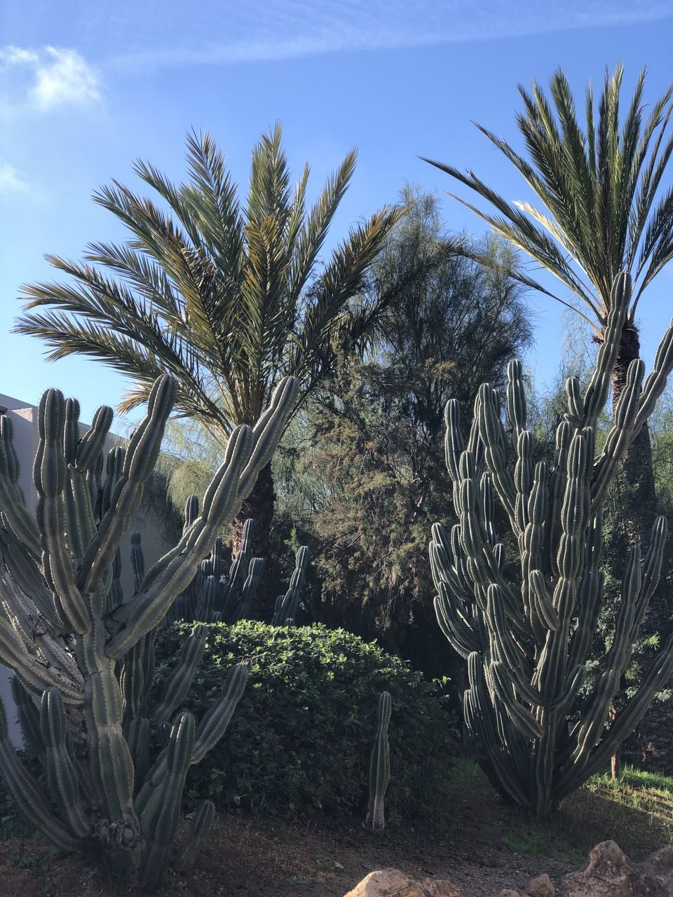 jardin exotique de rabat
