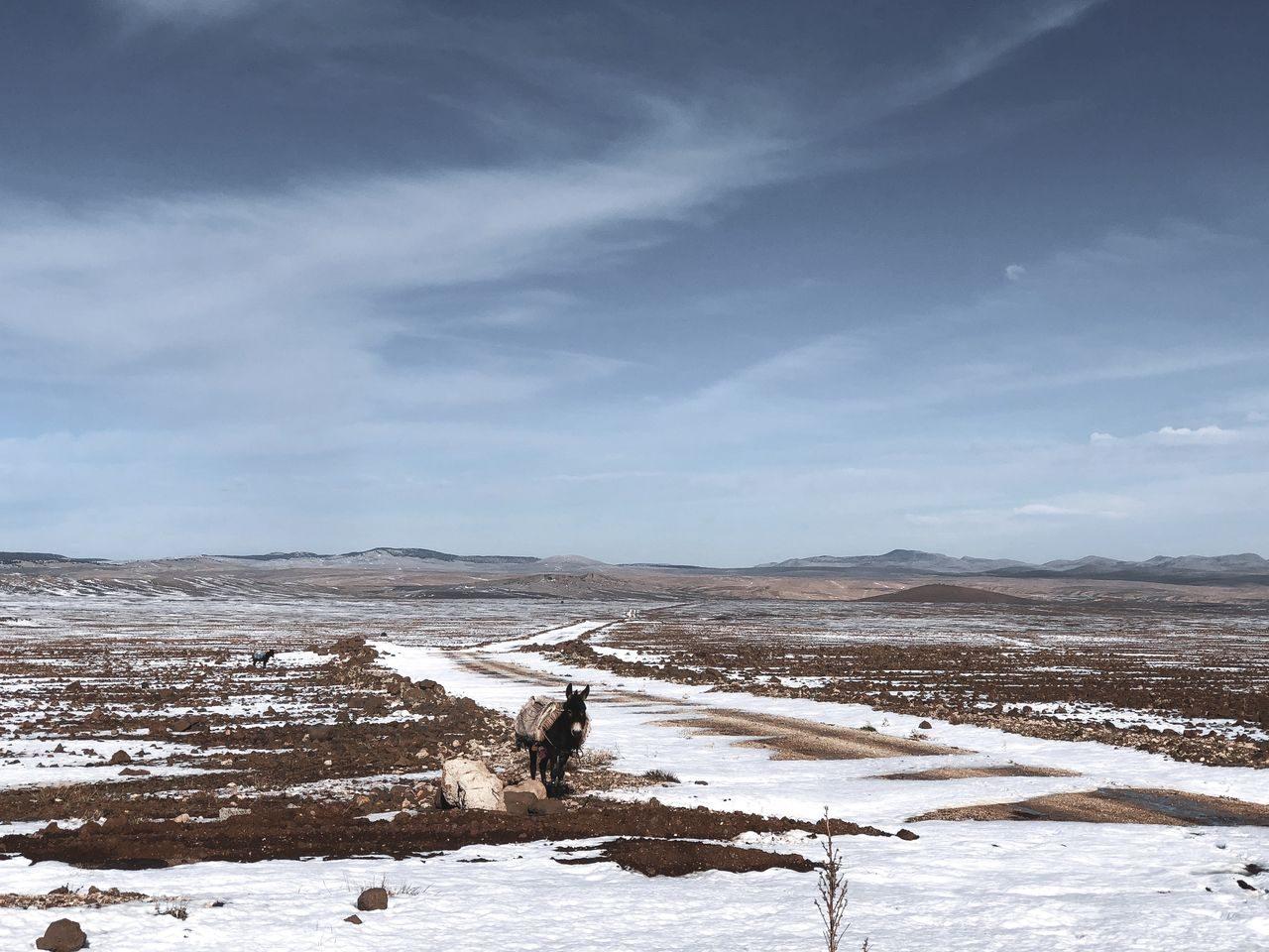 le Maroc en van - Moyen Atlas IFRANE (2)