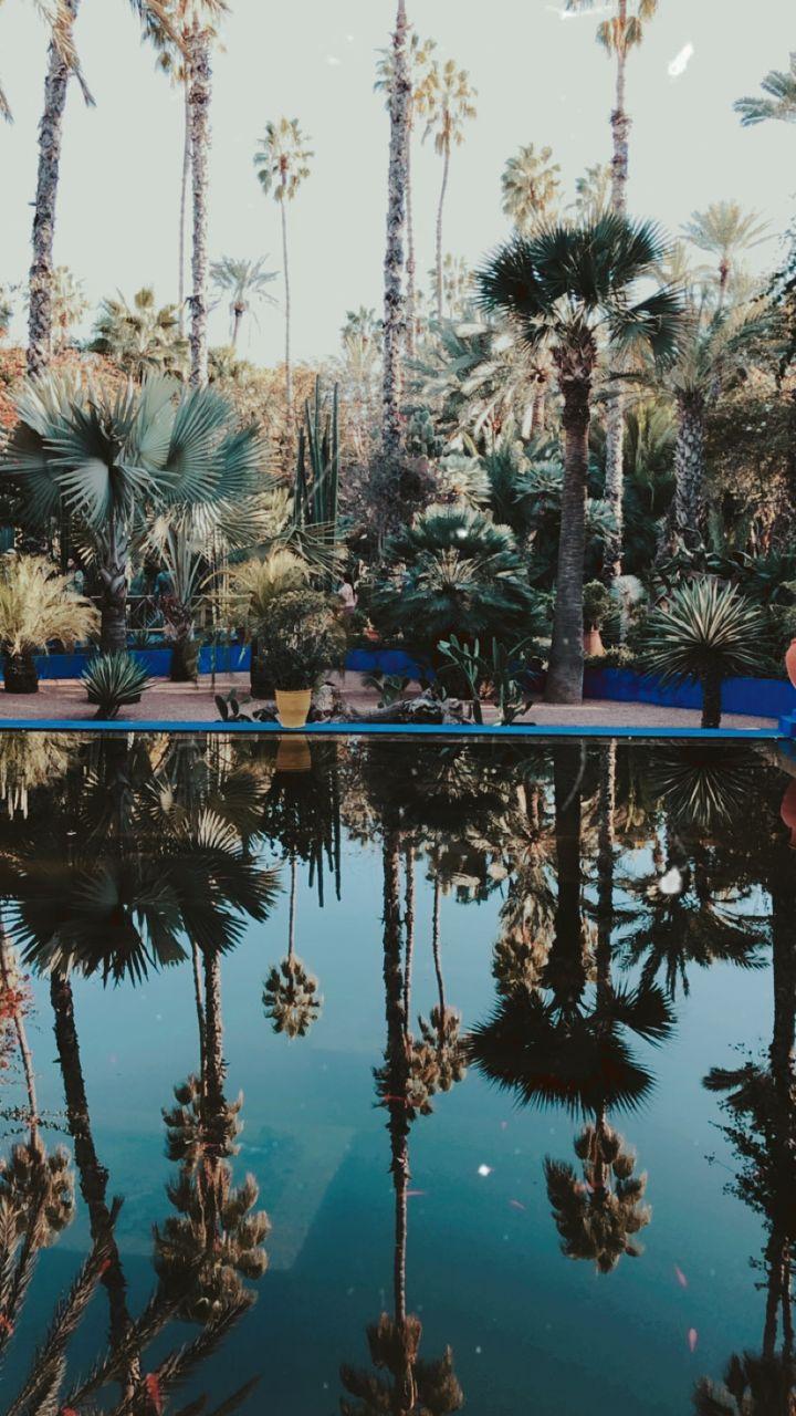 Le jardin Majorelle et le musée Yves Saint Laurent (1)