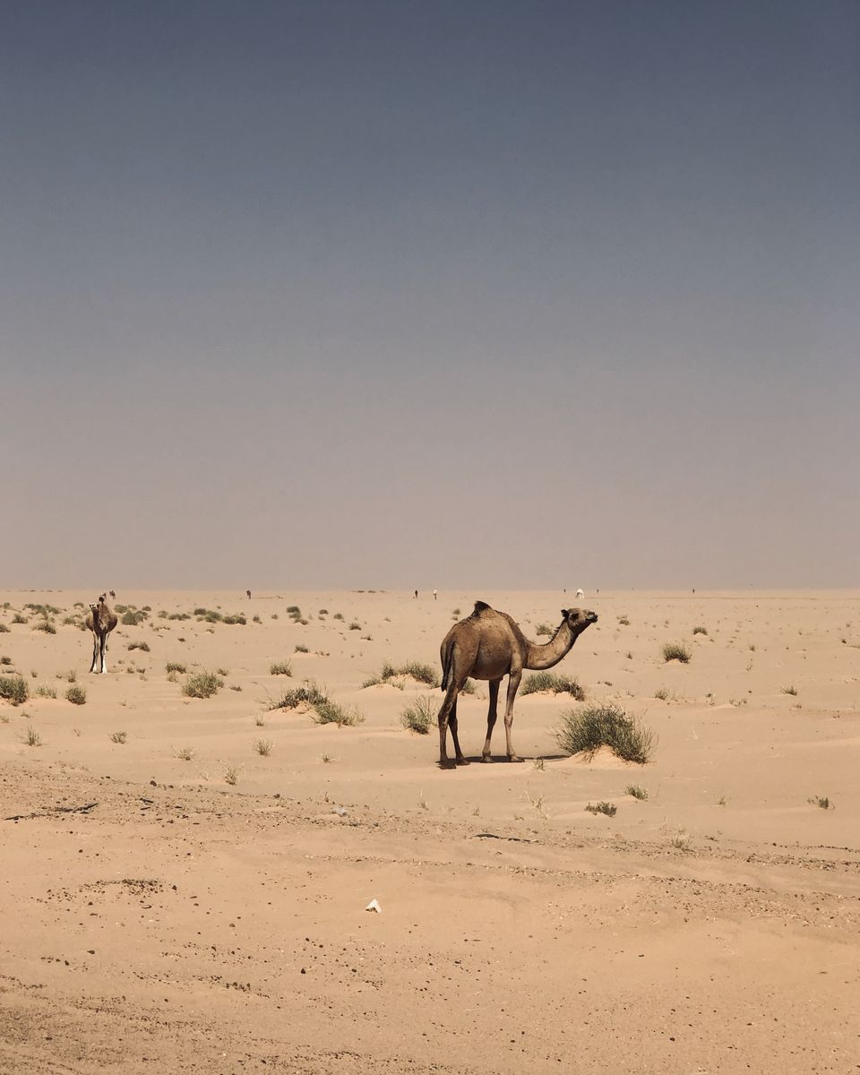 On traverse en van la Mauritanie - paysages Mauritaniens (17)