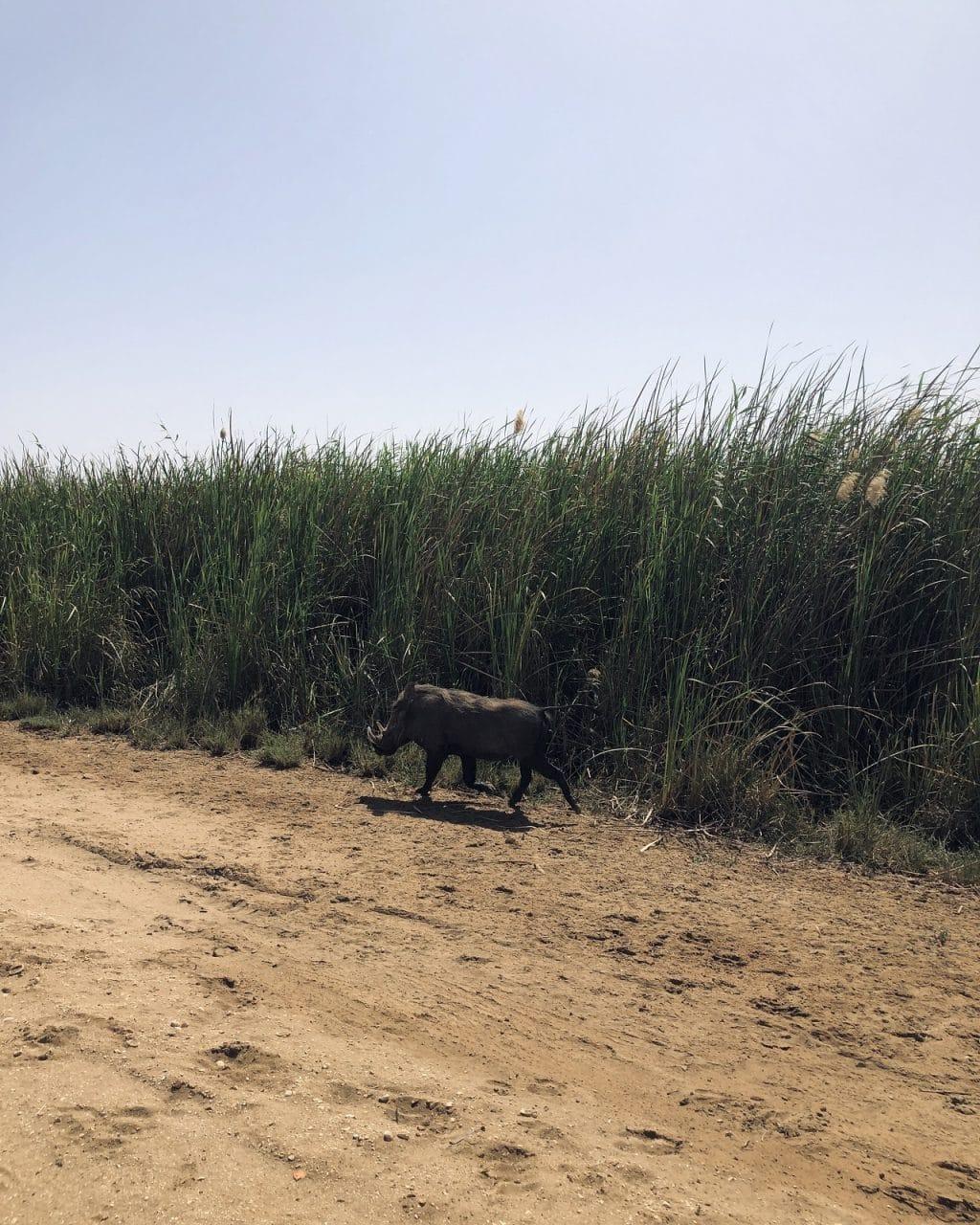 le parc Diawling - Mauritanie - frontière Diama (2)