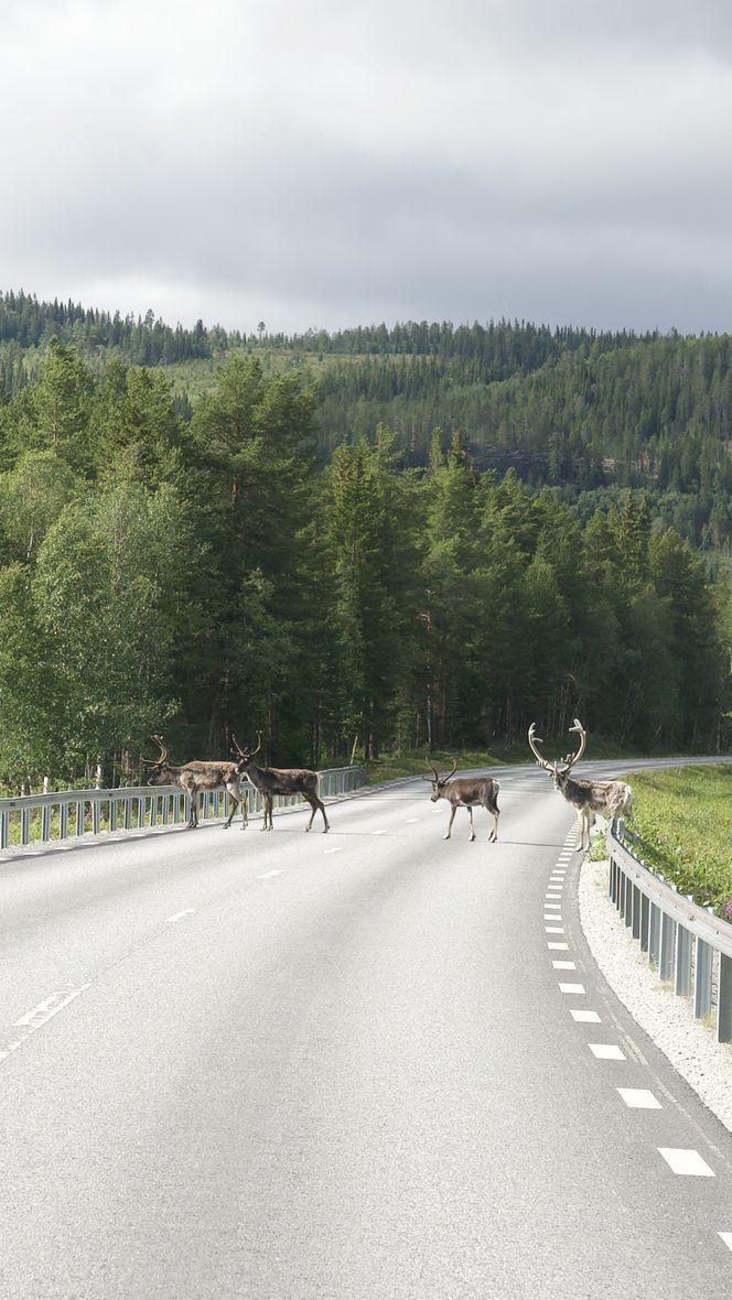 rennes en Suède